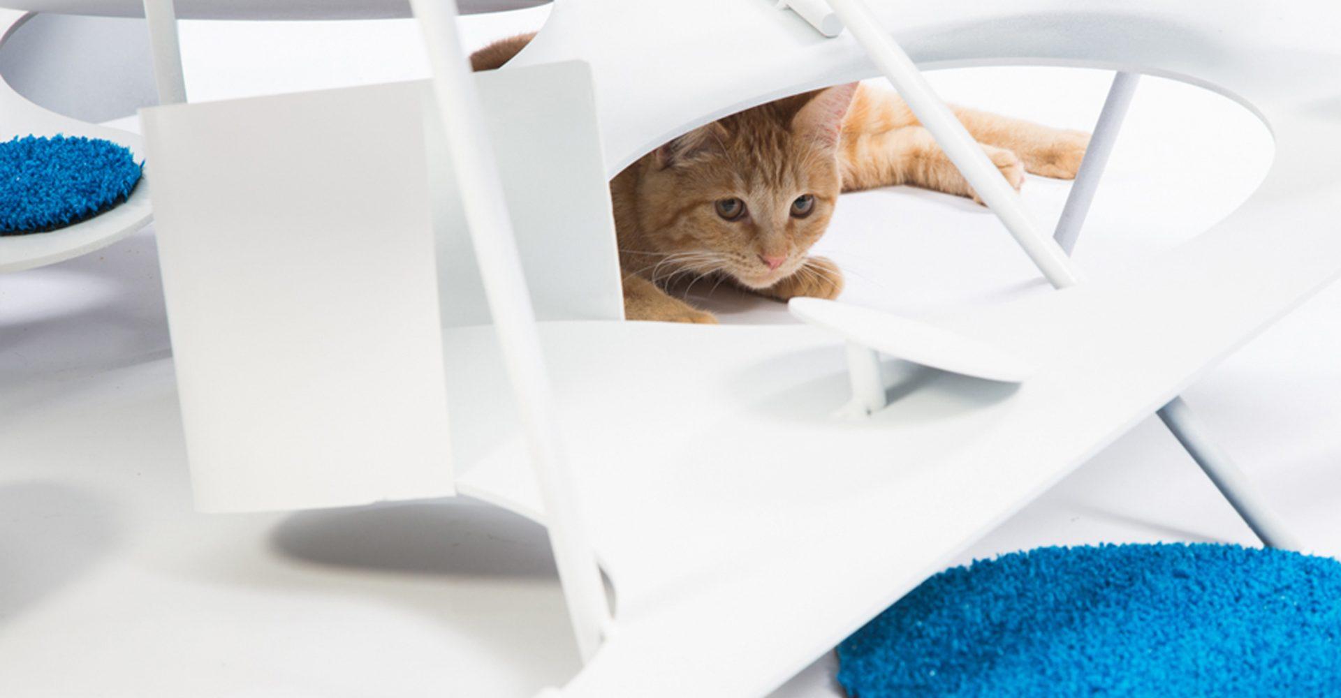 Cathouse 3